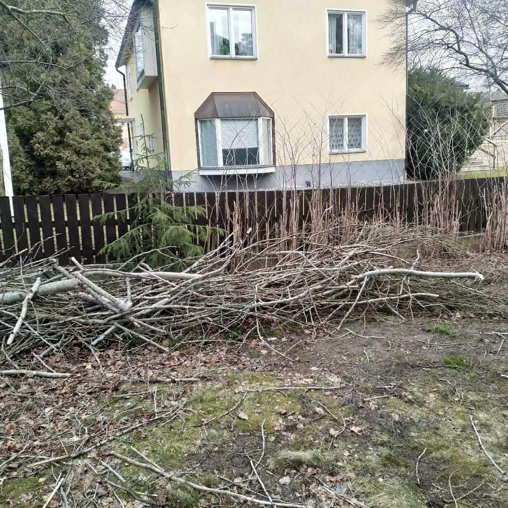 image of Kvistar och några stubbar - Lidingö