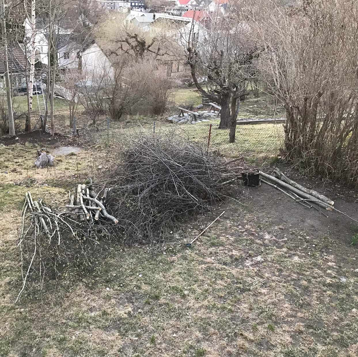 image of Grenar o mindre trädstam - Täby