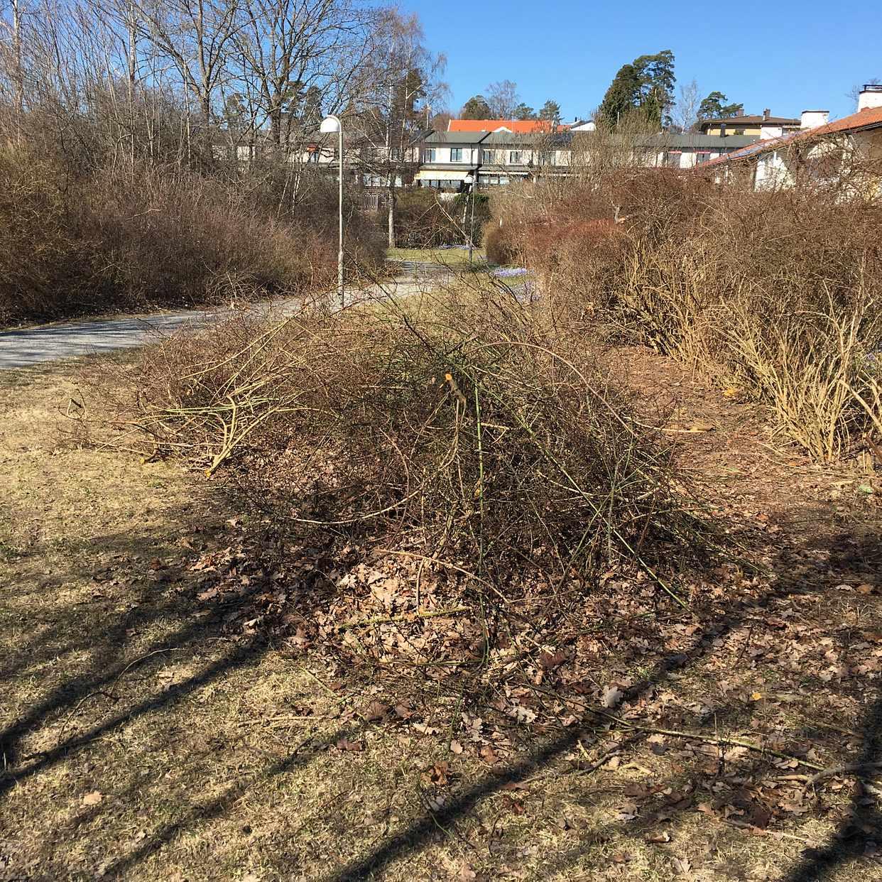 image of Trädgårdsris - Hässelby
