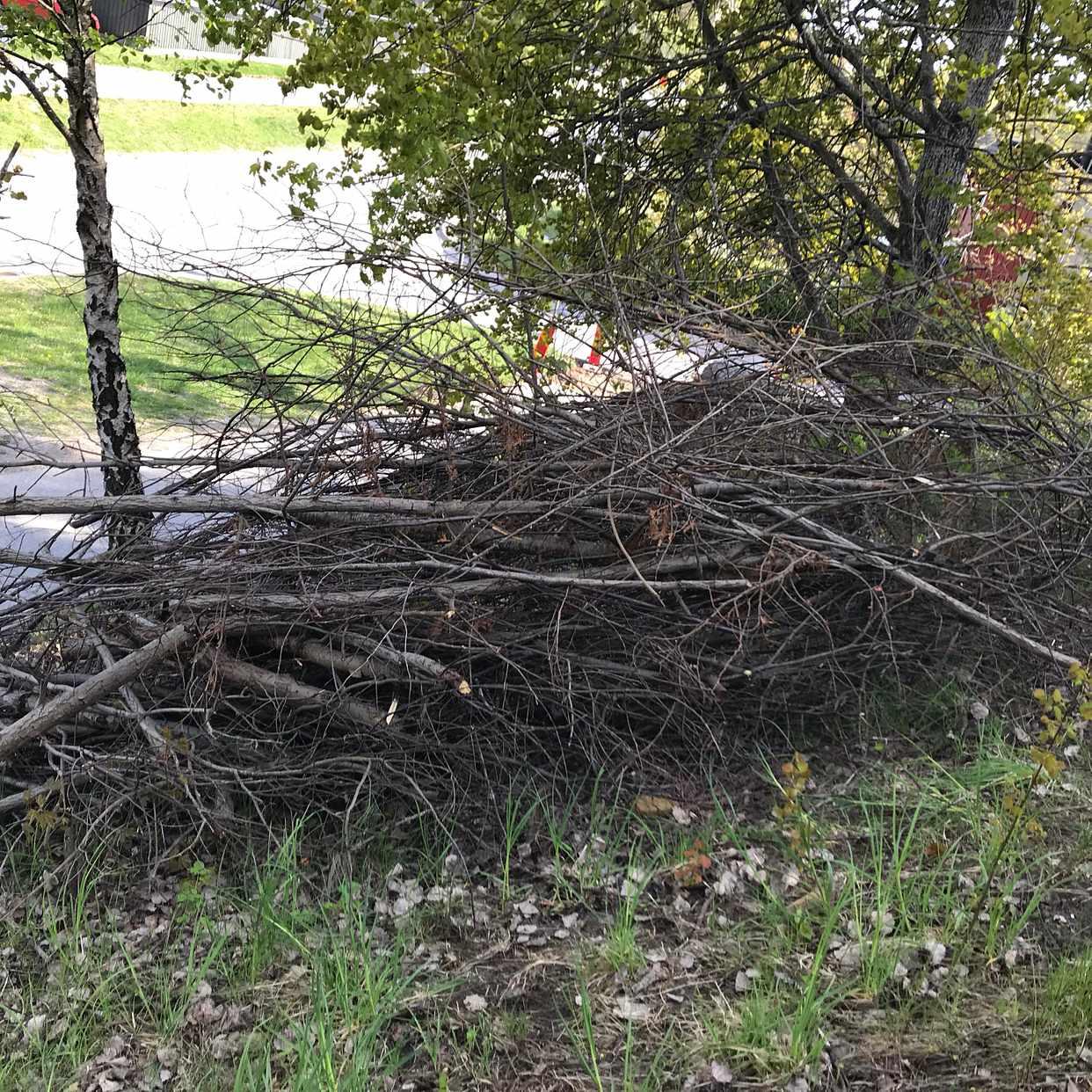 image of Nedhuggna småträd grenar - Segeltorp