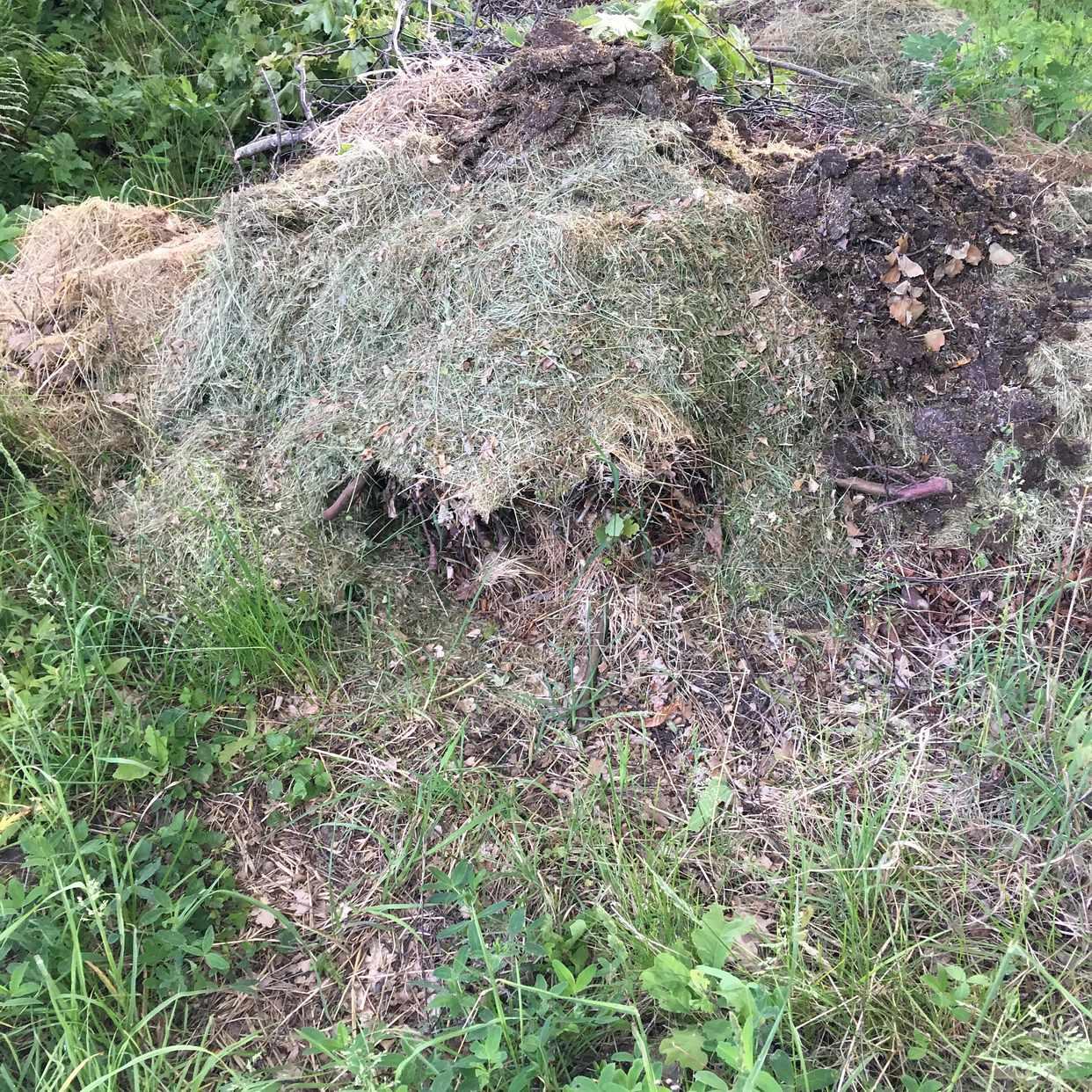 image of Två högar löv, gräs, gren - Värmdö