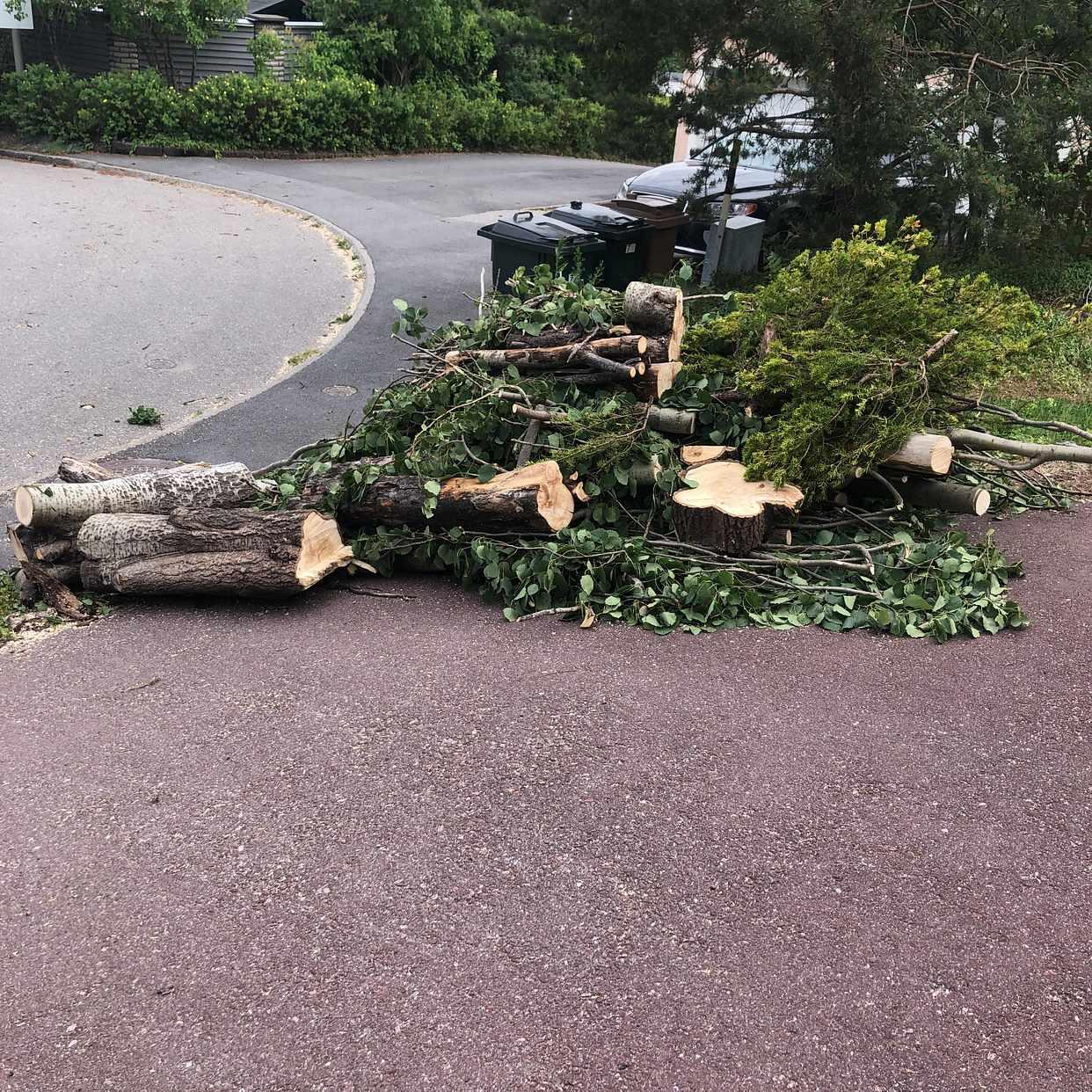 image of Ett stycke nedhugget träd - Spånga