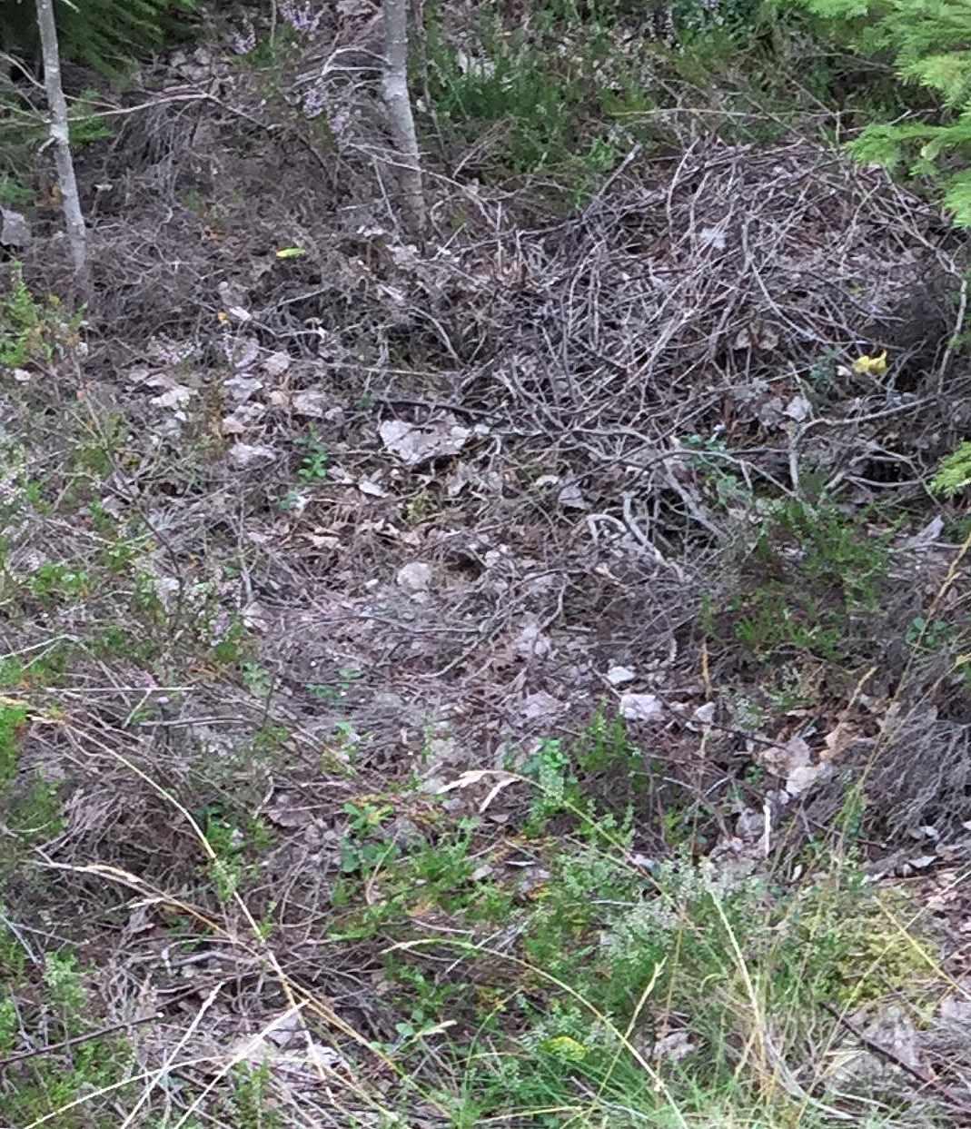 image of Gräs och lite kvistar - Vallentuna