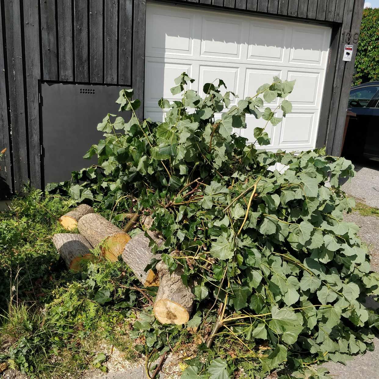 image of Mindre träd och buskar - Sollentuna