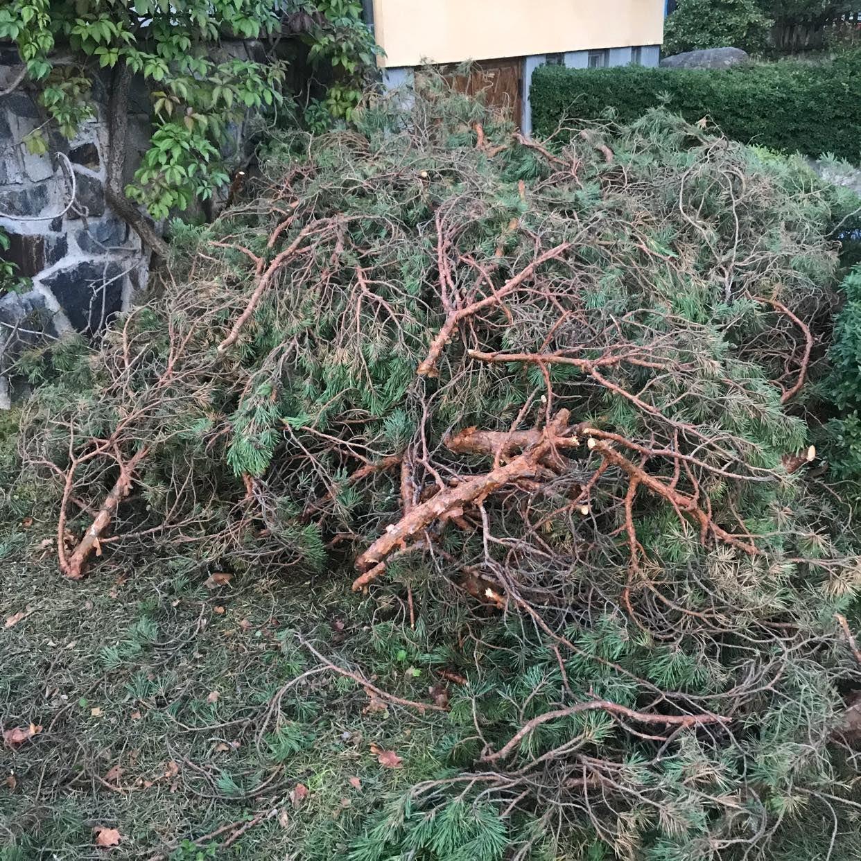image of Nedtagen tall + buske - Bromma