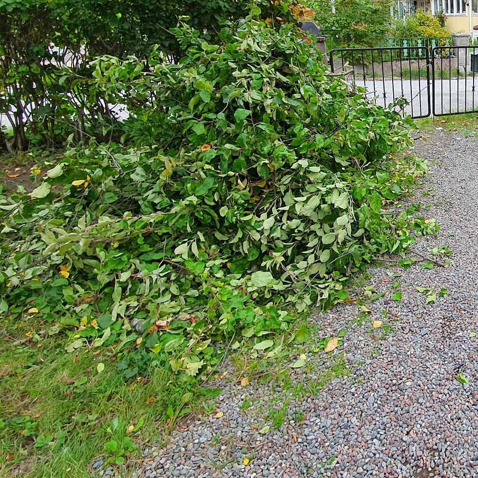image of Grenar och kvistar - Älvsjö