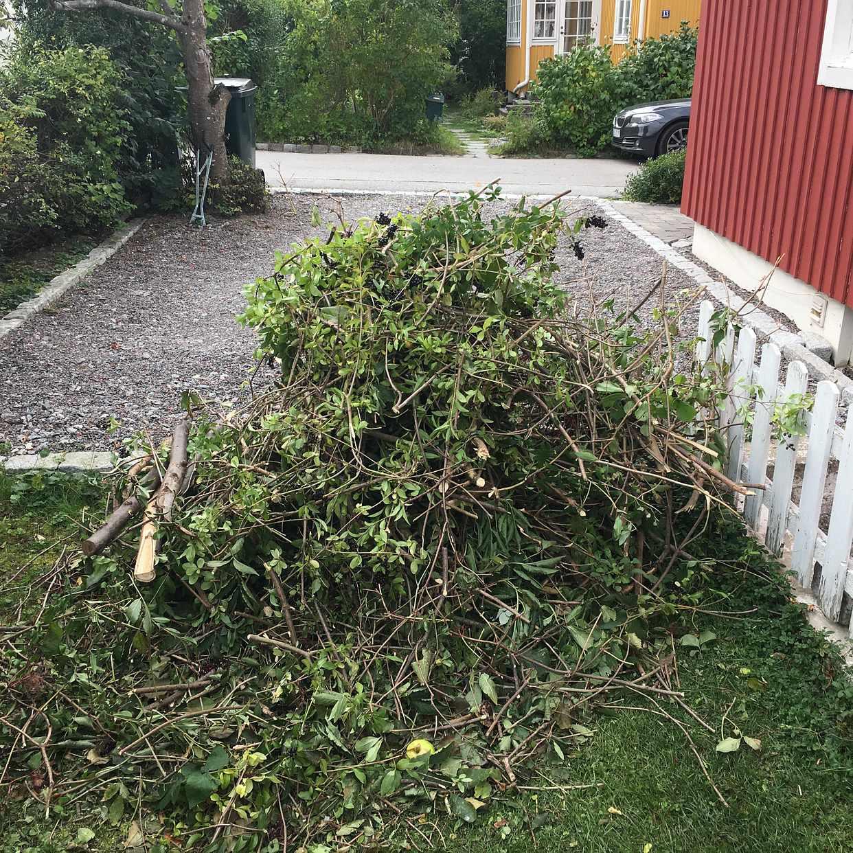 image of Småkvistar o grenar - Bromma