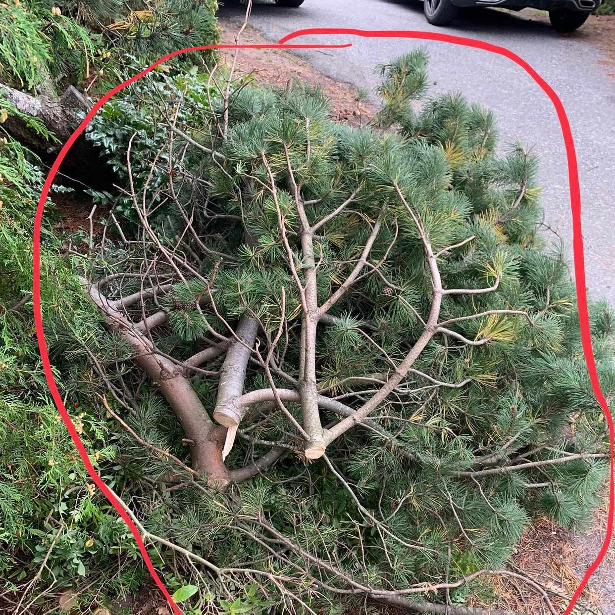 image of Grenar och en buske - Täby