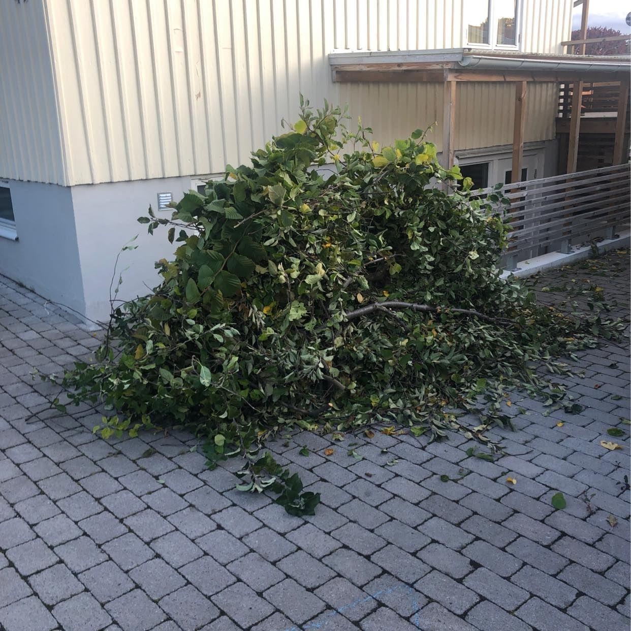 image of Hög med grenar och löv - Bromma