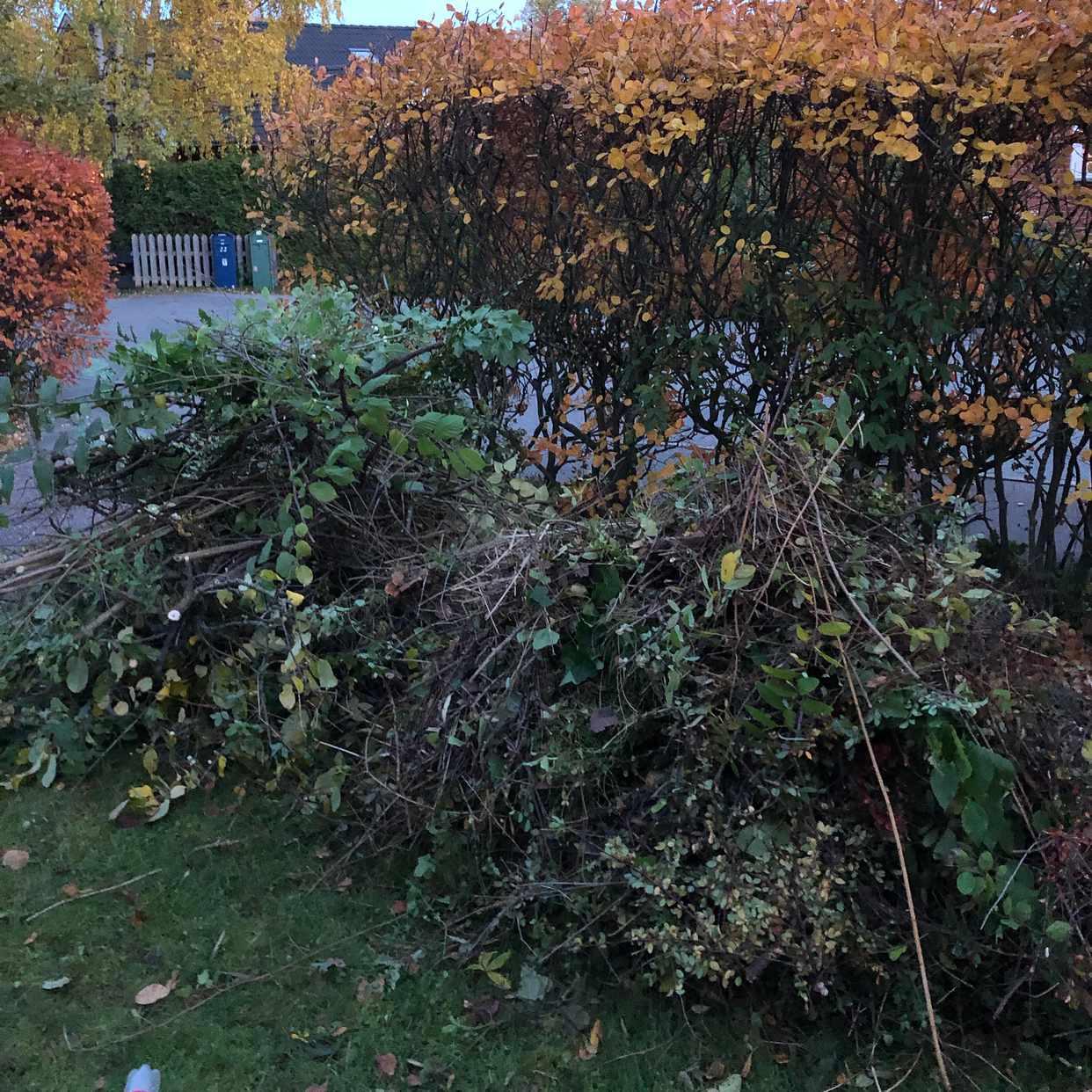 image of Lövsäckar och grenar - Lidingö