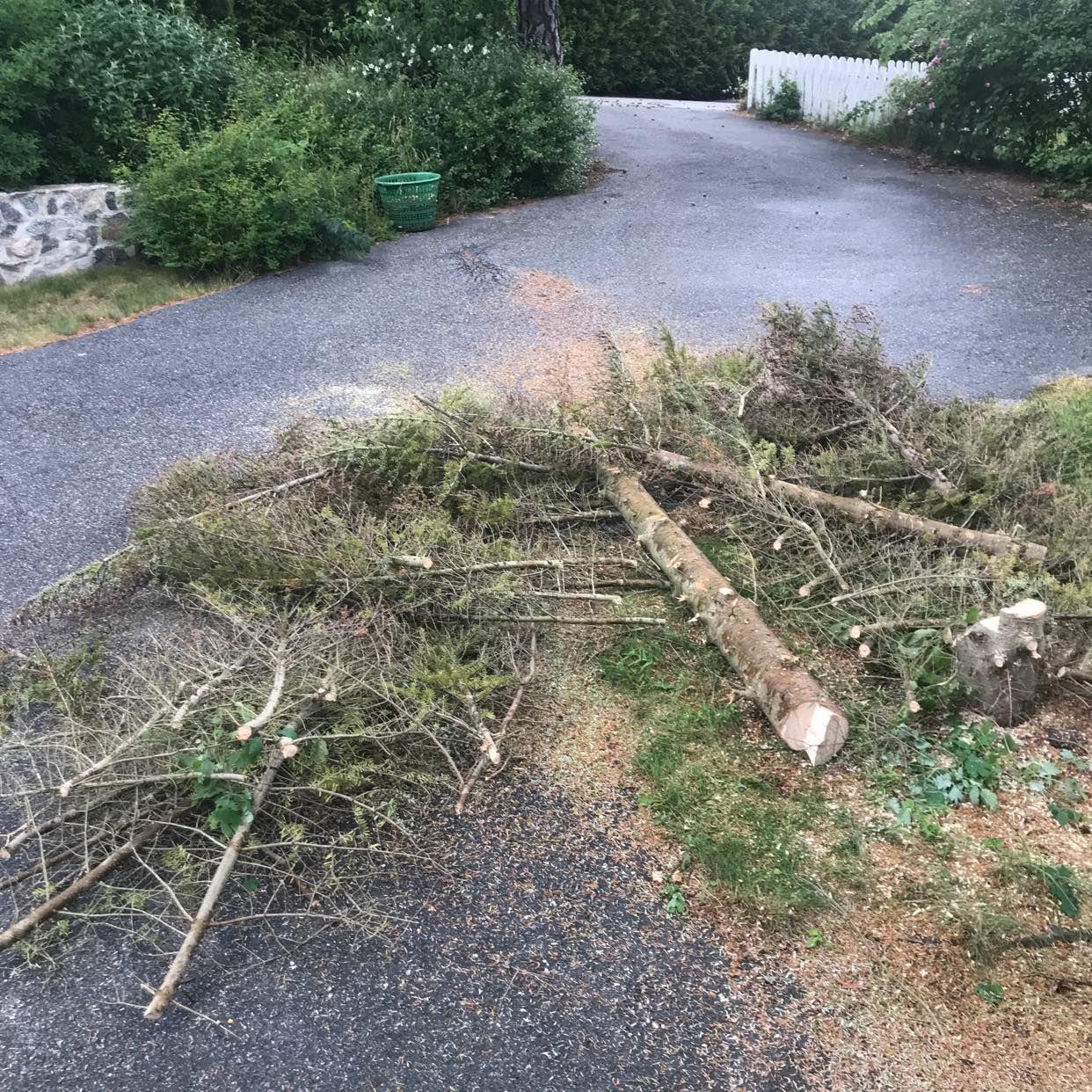 image of Träd, fällt och kvistat - Sollentuna