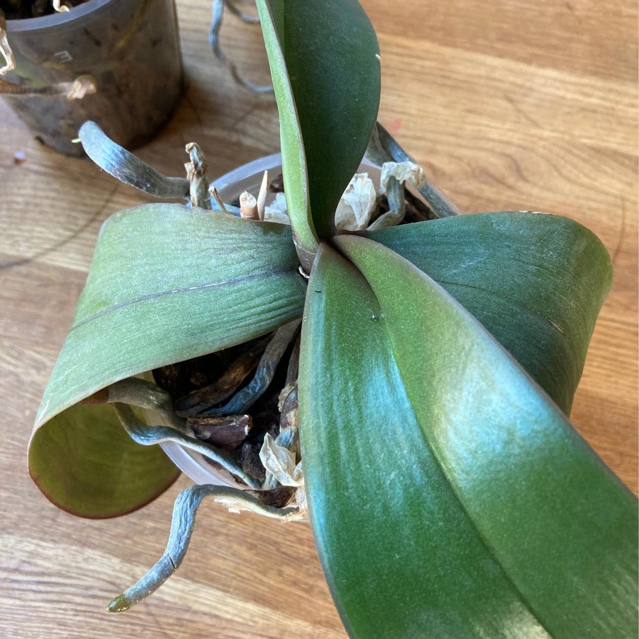 image of Orkidéer bortskänkes - Tyresö