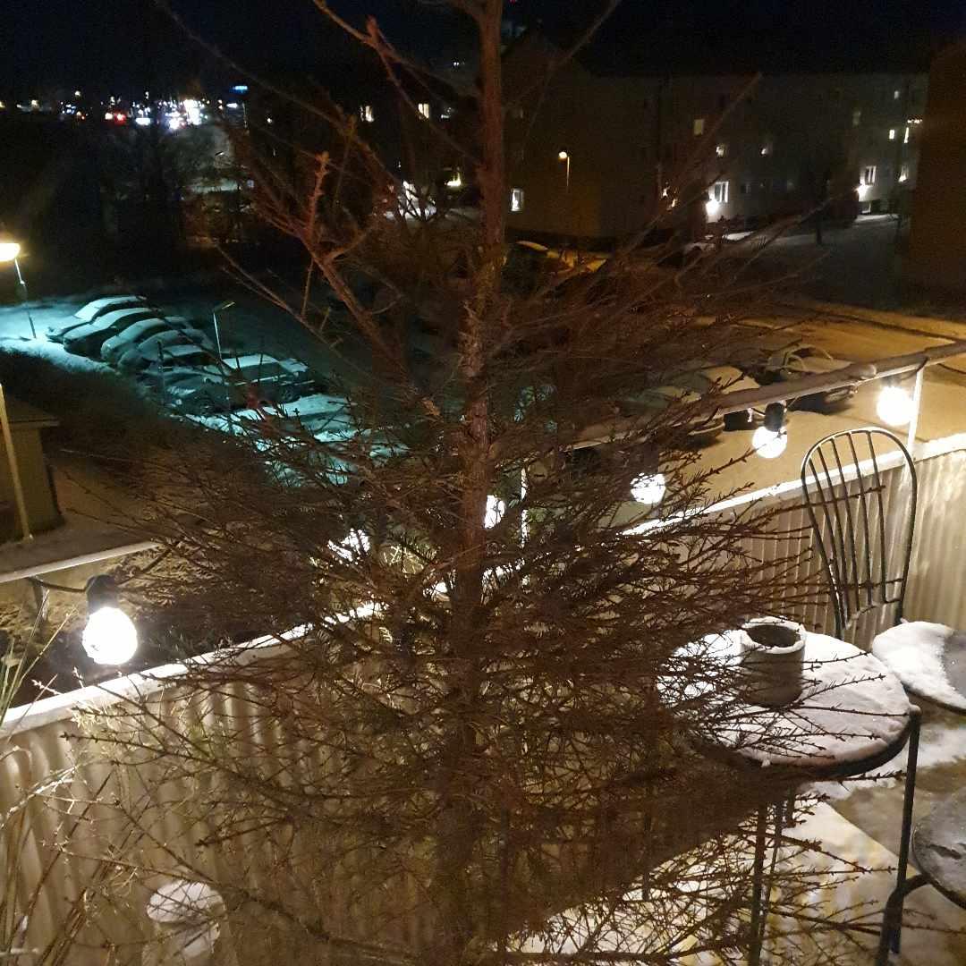 image of Julgran till tippen - Norrtälje