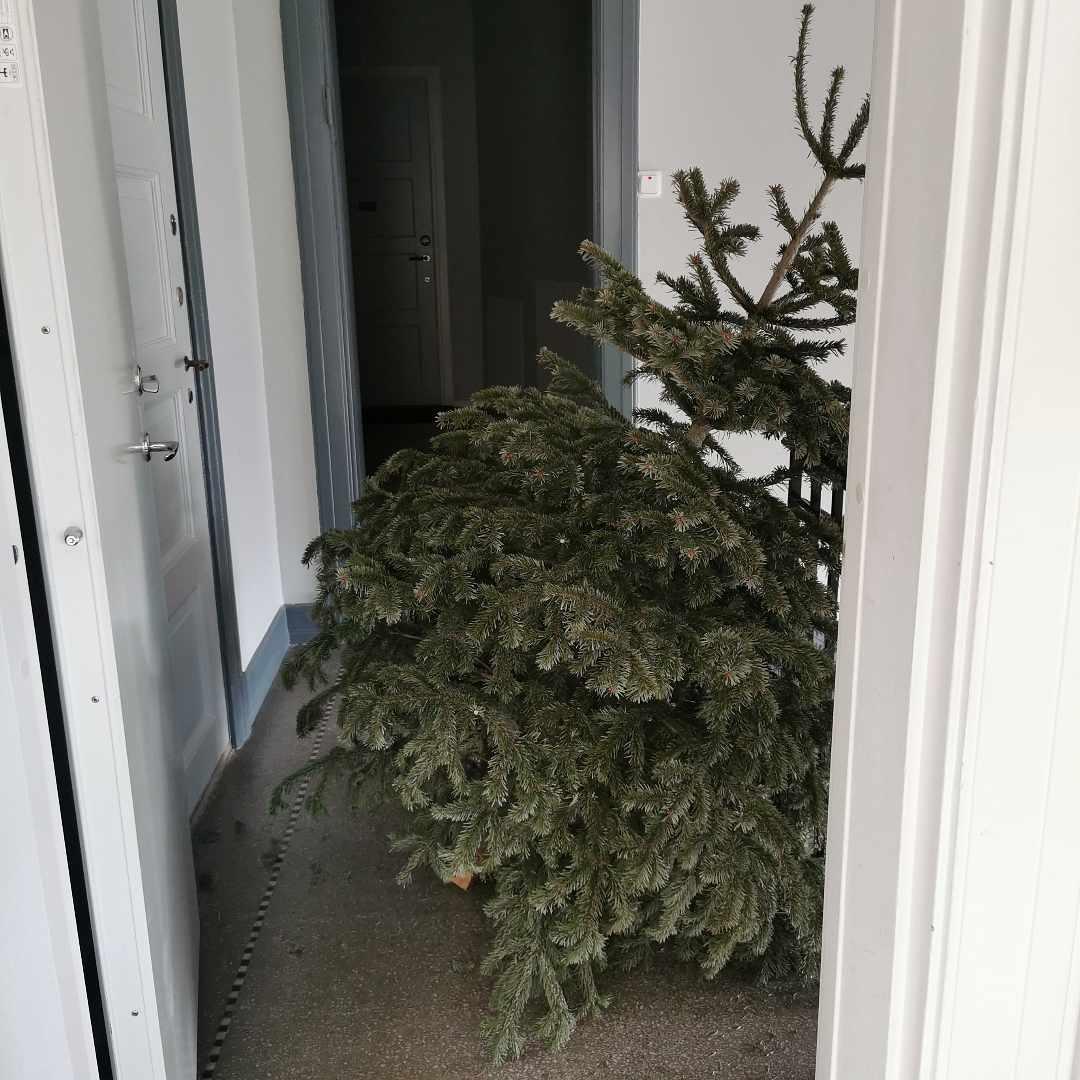 image of Throw away Christmas tree - Malmö