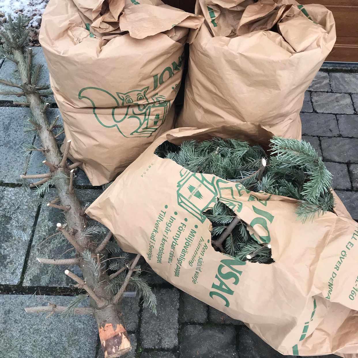image of Christmas tree - Djursholm