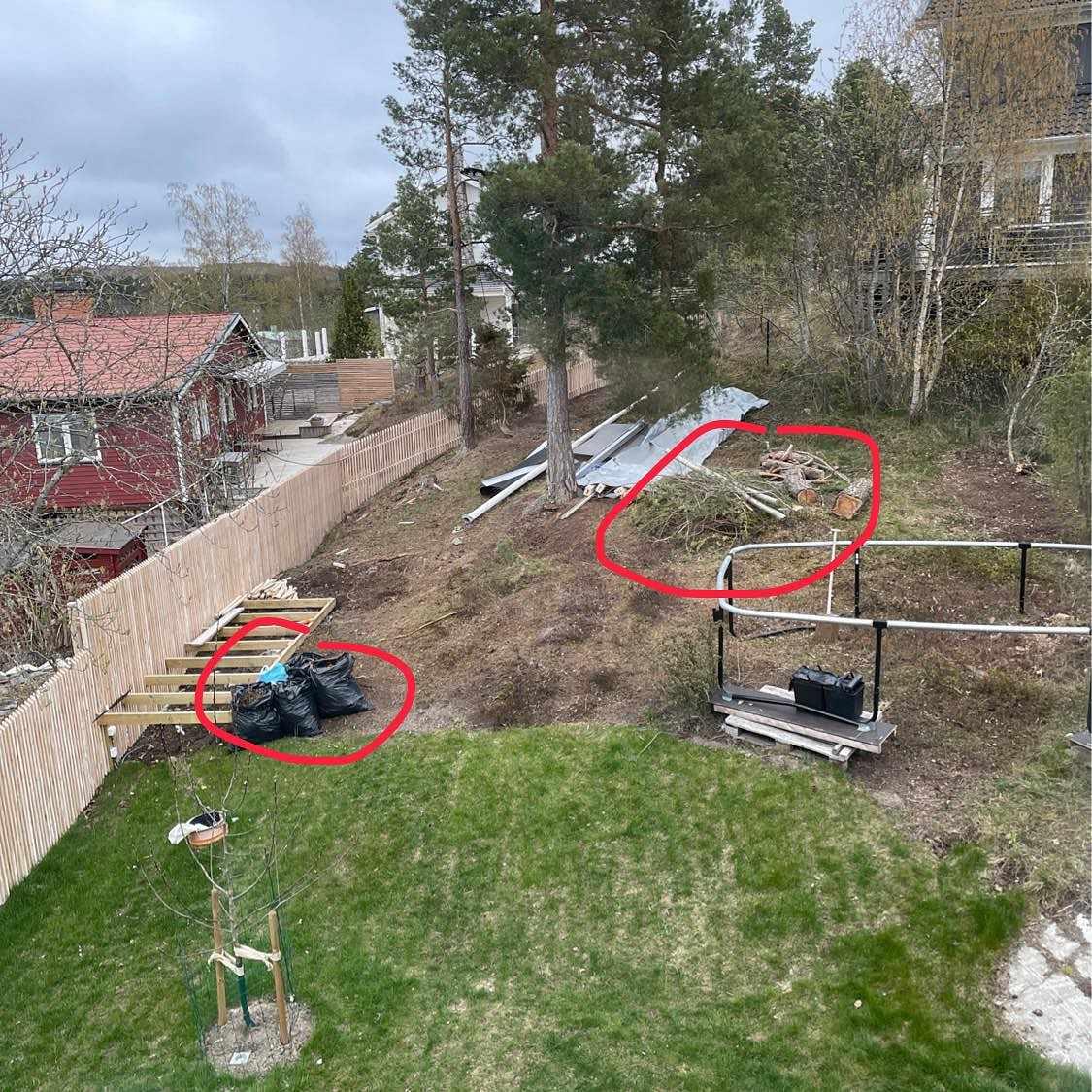 image of Grenar ved trä - Lidingö