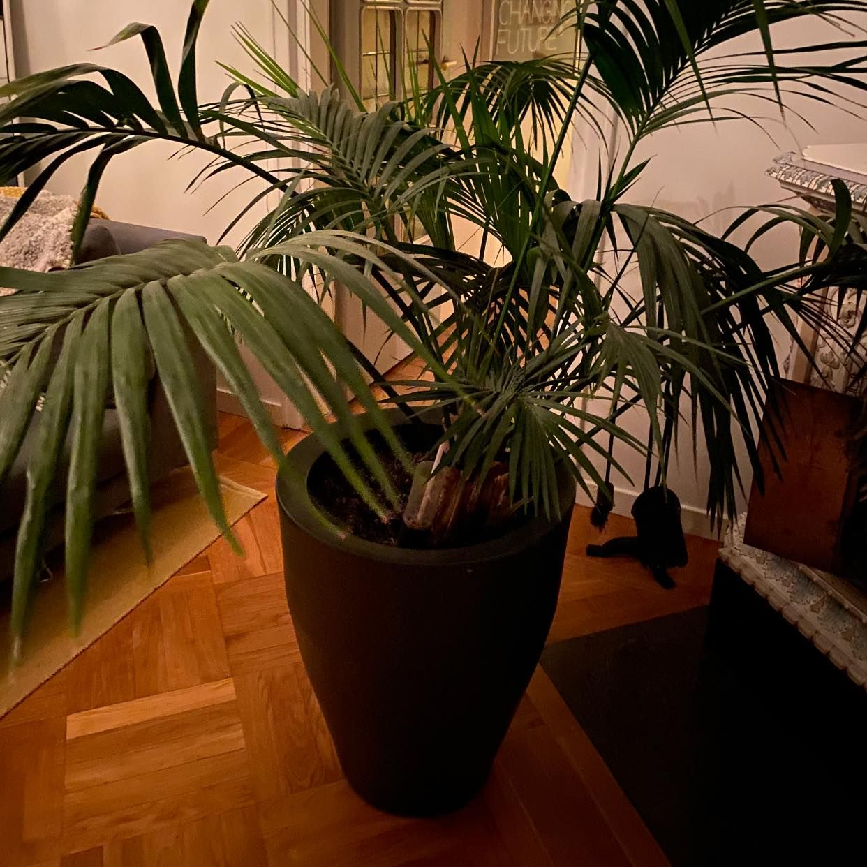 image of Move furniture -