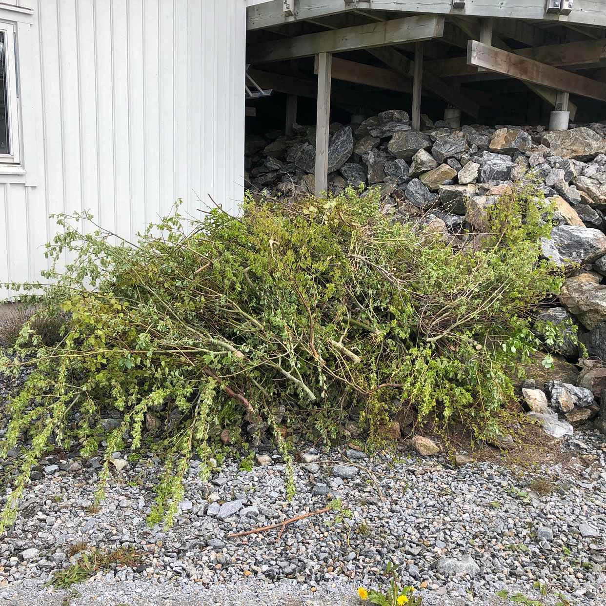 image of En mindre mängd sly - Skärhamn