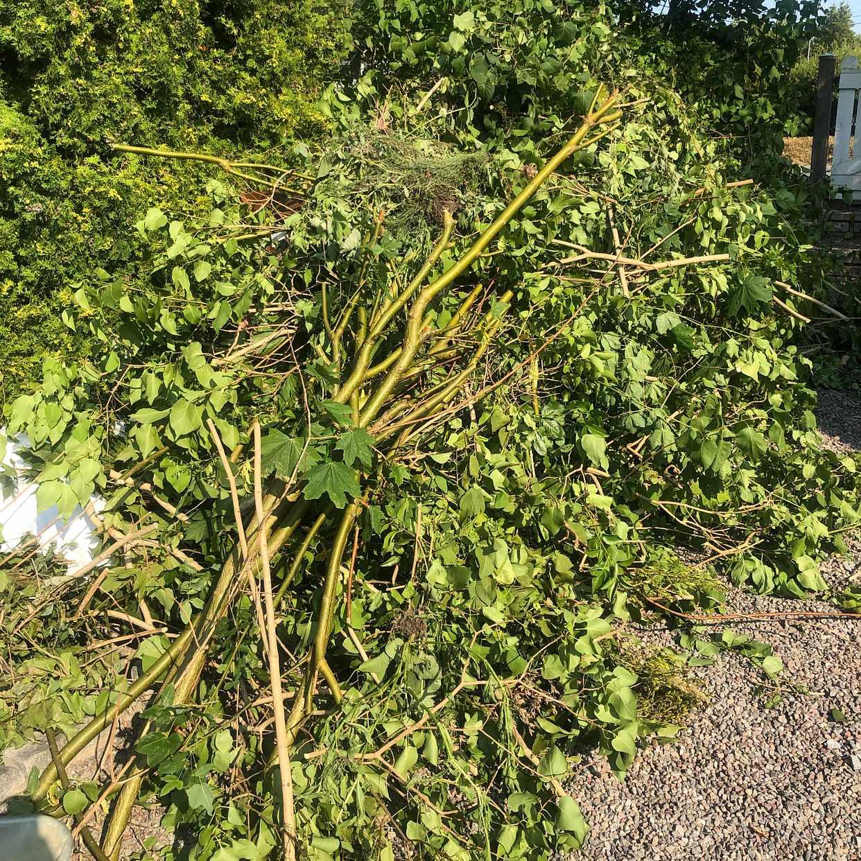 image of Avfall från beskärning - Tyresö