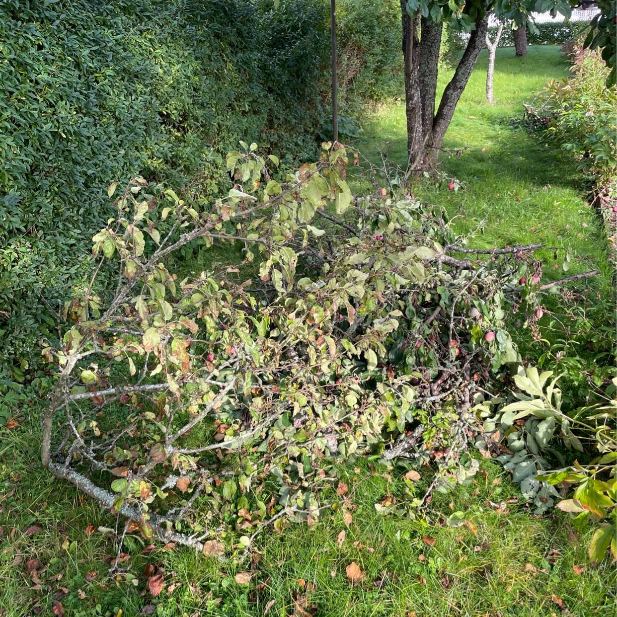 image of Köra bort avsågade grenar - Nyköping
